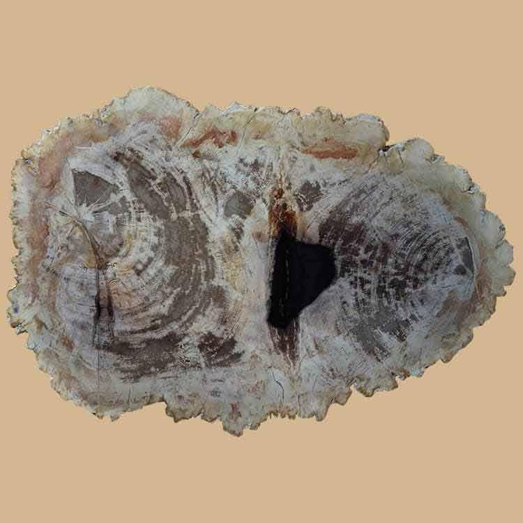 BL 585A